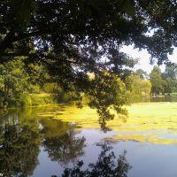 Priory Park Lake (4), Рейгейт