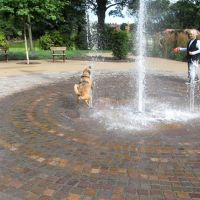Dog  in a Fountain, Сандерленд