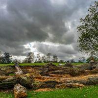 Rotting logs Verulam Park St Albans, Сант-Албанс