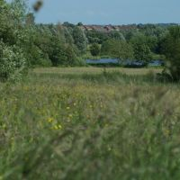 Brierley Forest - Meadow in Full Flower, Саттон-ин-Ашфилд
