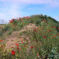 Wild Flowers on Sand dune, Саутпорт