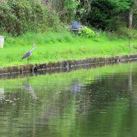 Bridgewater Canal - Urmston, Trafford M32 8, England, United Kingdom, Сейл