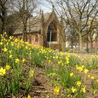 St. Marys Church daffodils, Стокпорт