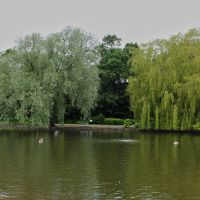 Ropner Park Stockton On Tees, Стоктон
