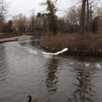 Ropner Park, Стоктон