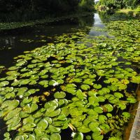 Stourbridge Canal, Стоурбридж