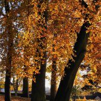 Mary Stevens Park, Стоурбридж