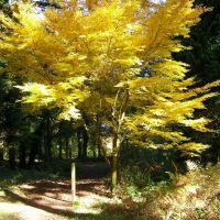 beautiful tree, Стретфорд