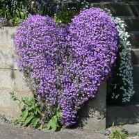 Slad Rd. Stroud, heart flowers, Строуд
