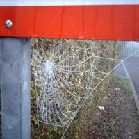 Morning spiders web, Траубридж