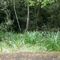 Woodland in Farnborough, Фарнборо
