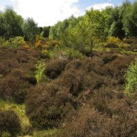 Flora and Fauna at Freshfield Dune Heath, Формби