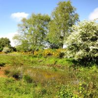 Heathland owned by the Wildlife Trust for Lancashire, Manchester and North Merseyside, Формби
