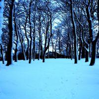 More trees, Хаддерсфилд