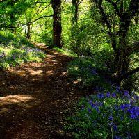 Ladybrook valley - spring, Хазел-Гров