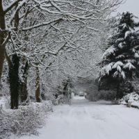 Towers Road Poynton In the Snow, Хазел-Гров