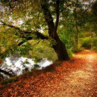 poynton path, Хазел-Гров