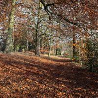Autumn Walk !, Хазел-Гров