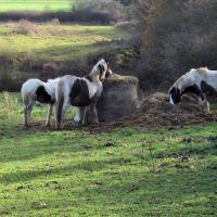 Horses in Harlow, Харлоу
