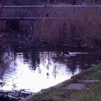 Town Parks Pond, Харлоу