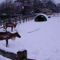 Deer, Харлоу