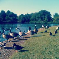 Lovely Birds, Харлоу