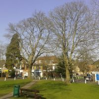 Leyton Green sycamore trees (March), Харпенден