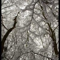 Snow Leaf, Хертфорд