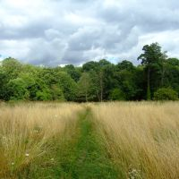 A Footpath through Summer Field, Ware Park, Хертфорд