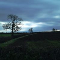Trees on the field boundry near Sibson., Хивуд