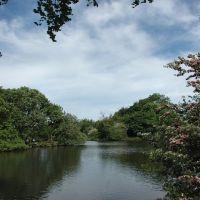 Hall Lane Pond 2, Хиндли