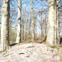 mound and beeches, Хиндли