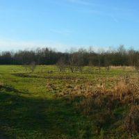 Meadow, Хиндли