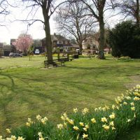 Looking over daffodils towards Priory Road houses, Ecclesfield, Sheffield S35, Чапелтаун