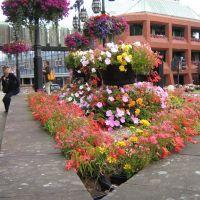 Chester főtere virágokkal., Честер
