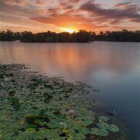 Lilipads at Sunrise, Чешант