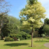 Egy szép fa (A nice Tree), Чичестер