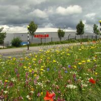 Looking towards Parkway Retail Park and Cricket Inn Road from a wild flower meadow, Wybourn, Sheffield S2, Шеффилд