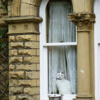 White cat at the window, Шипли