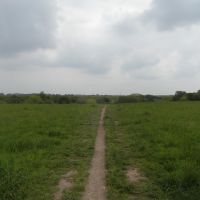 Molesey Heath Nature Reserve, Эшер