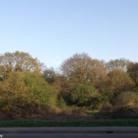 Littleworth Common by the A307, Эшер