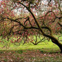 Zen tree, Кардифф