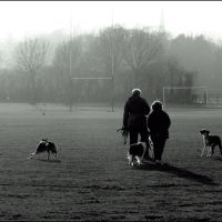 Walking the dogs in the fog, Кардифф