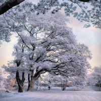 Serenity in nature, Рондда