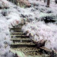 candyfloss stairway, Рондда