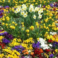 Flowers, Брегенц