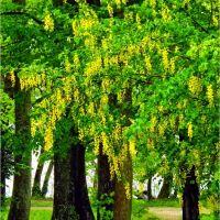 Toscanapark, 4810 Gmunden, Ausztria Ort Landschloss, Гмунден