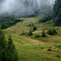 Alpine meadow, Инсбрук
