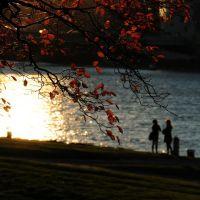 Herbst in Linz, Линц