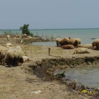 Caspian sea coast Каспийске море, Гобустан